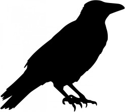 crow-vector-silhouette